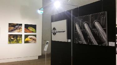 """Ausstellung """"30 Jahre Schanzer Photoclub"""""""
